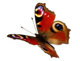 Transformation: Lessons Learned From Butterflies (Part 2)